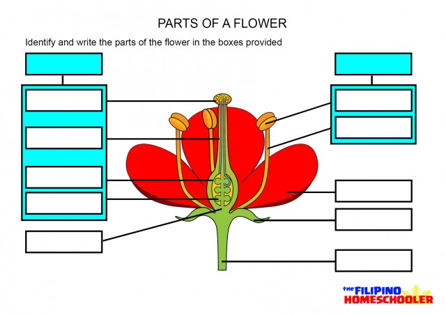 Parts of a Flower Worksheet u2013 The Filipino Homeschooler