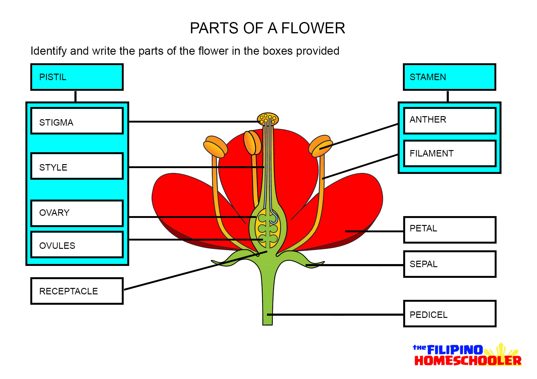 Uncategorized Leaf Anatomy Worksheet parts of a flower worksheet the filipino homeschooler you can download answer sheet here
