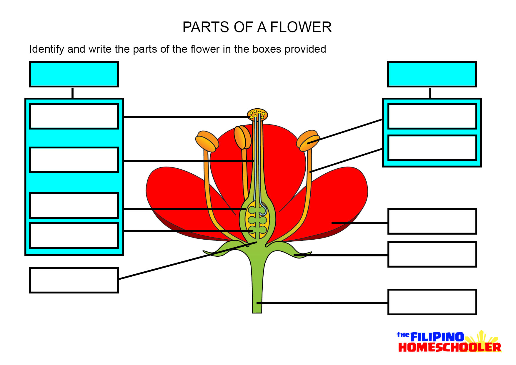 Worksheets Parts Of A Plant Worksheet parts of a flower worksheet the filipino homeschooler worksheet